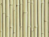 TAPETA BAMBOO BUZZ Rattan 23 - Wallpaper alt_tapety_kolor_rattan 23 Graphics - Colour